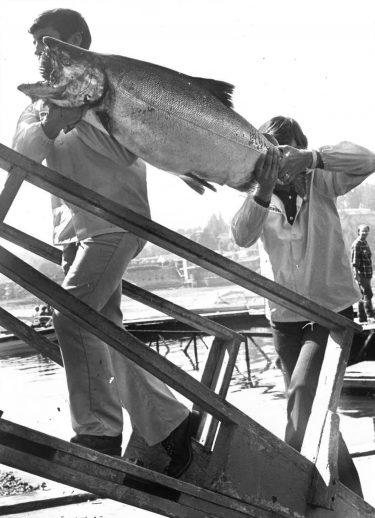 men carry huge salmon onto dock