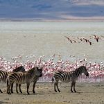 A lake in Africa with flamingoes and zebras along its shore.