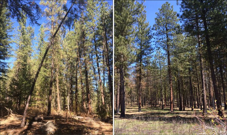 comparison of treated vs. untreated forests