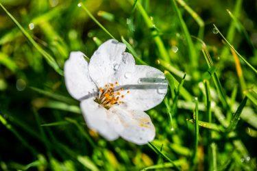blossoms on grass
