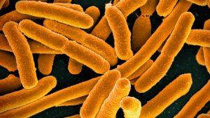 A close-up image of E. coli bacteria.