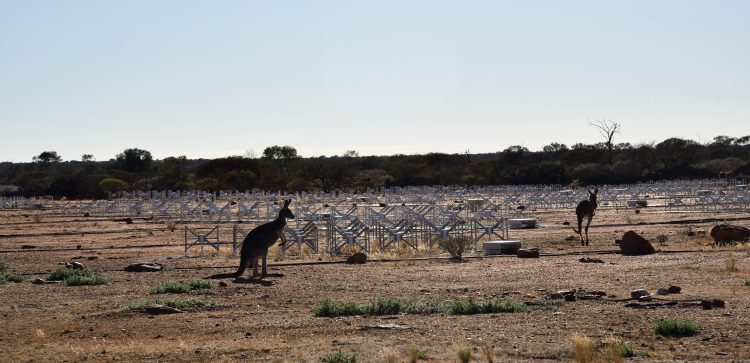 Kangaroos in the Australian desert, at the site of a radio telescope.
