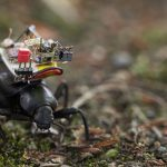 A beetle with a camera system on its back moves through a patch of moss
