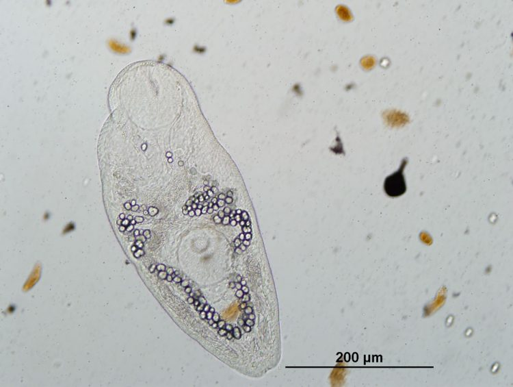 close up of a parasite