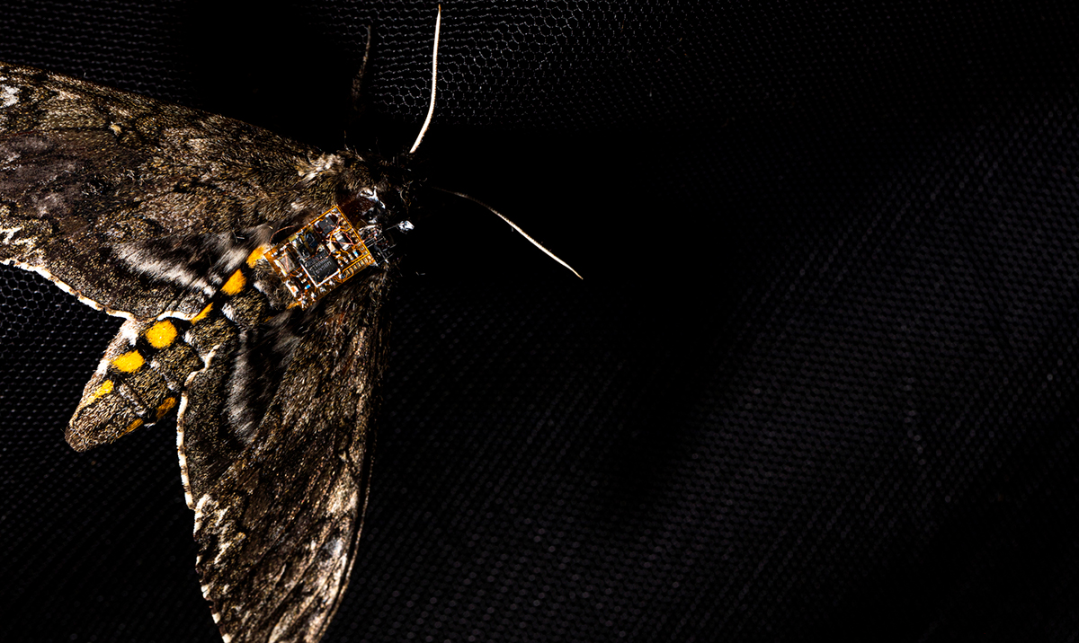 Airdropping sensors from moths: Researchers use flying insects to drop sensors from air, land them safely on the ground