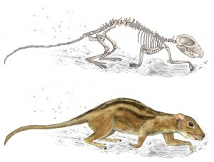An illustration of an ancient type of mammal that lived 75.5 million years ago.