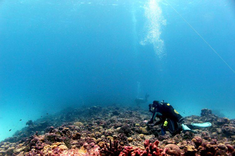 researchers sampling corals