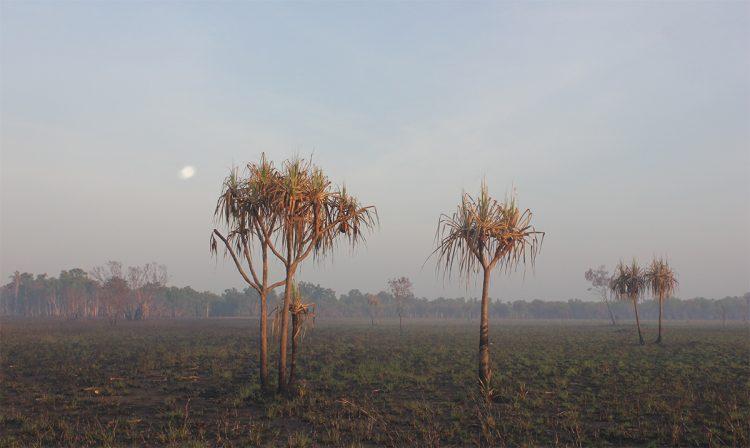 palm-like trees on a dry landscape