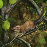 An artistic rendering of an ancient primate eating fruit in a tree shortly after the extinction of the dinosaurs