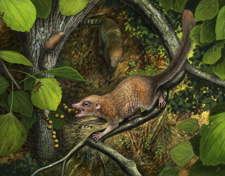 Scientists describe earliest primate fossils | UW News - UW News