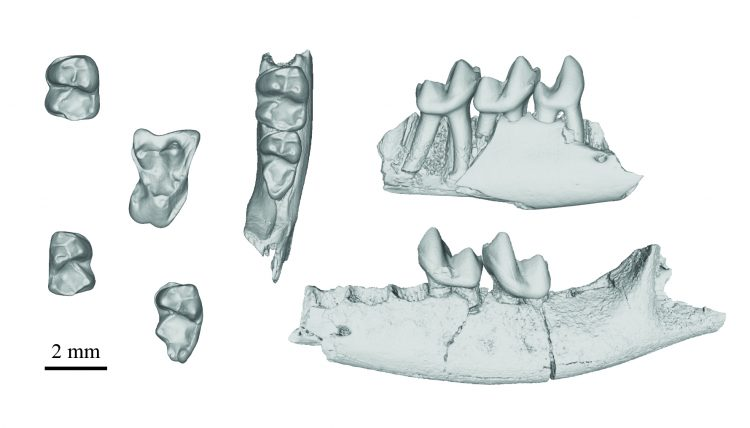 A CT scan image of fossilized teeth from an ancient, extinct primate.