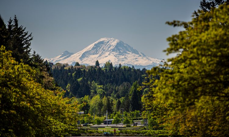 The view of Mount Rainier from the UW campus in Seattle
