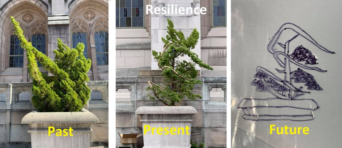 3 images showing the transformation of the bonsai