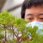 Close up of man with mask working on small delicate branches