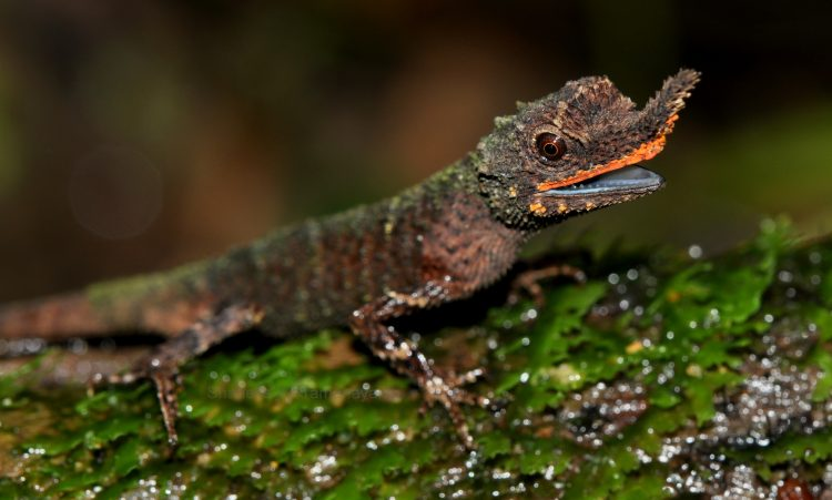 An image of a lizard in the rainforest
