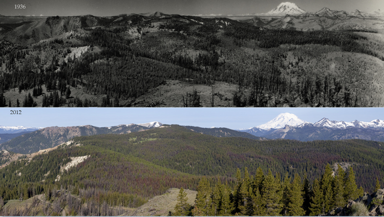 two photos show the change over time in tree cover under fire exclusion policies