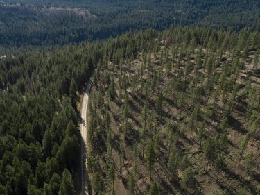 untreated vs. treated forestland