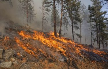 A low-intensity prescribed burn to reduce fuels in a forest accustomed to wildfires.