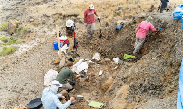 UW, Burke researchers discover four dinosaurs in Montana