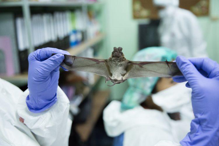 Showing a bat