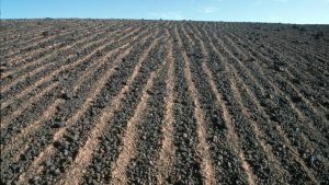 Brown barren landscape with straight lines