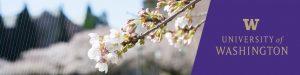 LinkedIn cover Cherry Blossoms