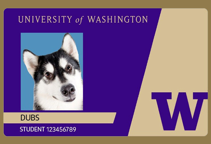 Husky card with profile picture of Dubs the dog on it.