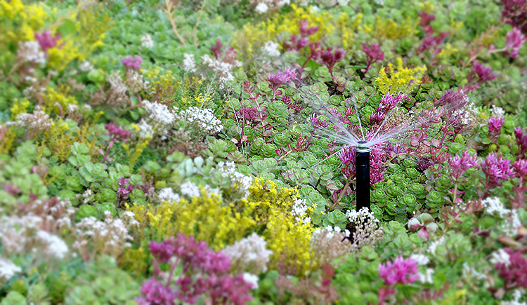 Beautiful flowers being water by an automated irrigation system