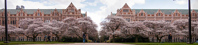 Cherry blossoms on the UW Quad. Photo by Katherine B. Turner