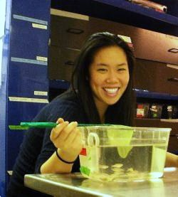 Cynthia Hsu working with zebrafish in lab