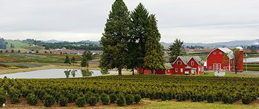 Nursery_with_red_buildings_in_rural_Washington_County_Oregon