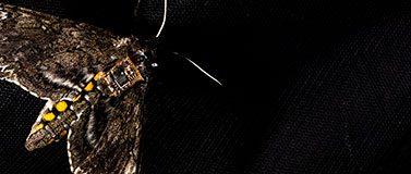 Moth with sensor
