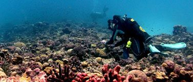 Diver inspects coral reef