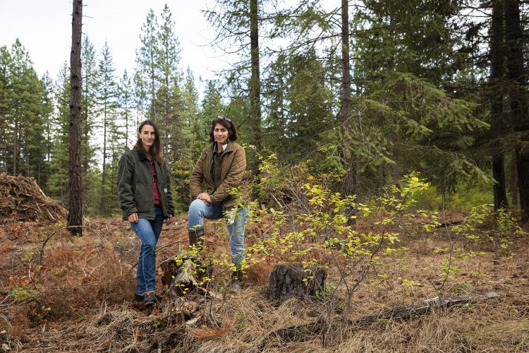 Portraits of wildfire researchers