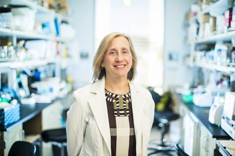 Dr. Pamela Becker's work through the Institute for Stem Cell and Regenerative Medicine is taking aim at cancer.