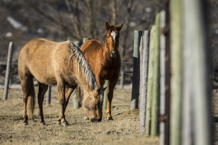 Horses are just one of many types of domesticated animals that live in Tom Miner Basin. Bordering Yellowstone, the area is also home to a range of wild animals.