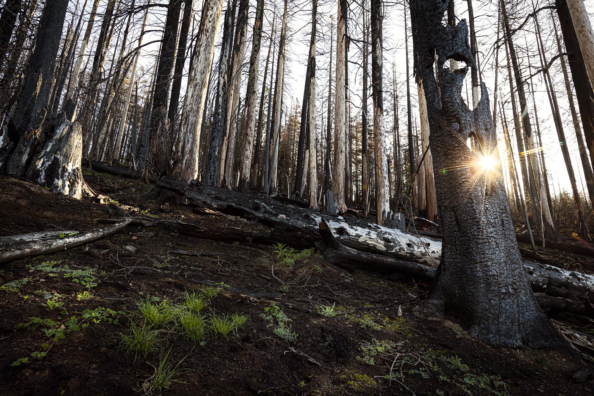 Norse Fire sunburst through trees