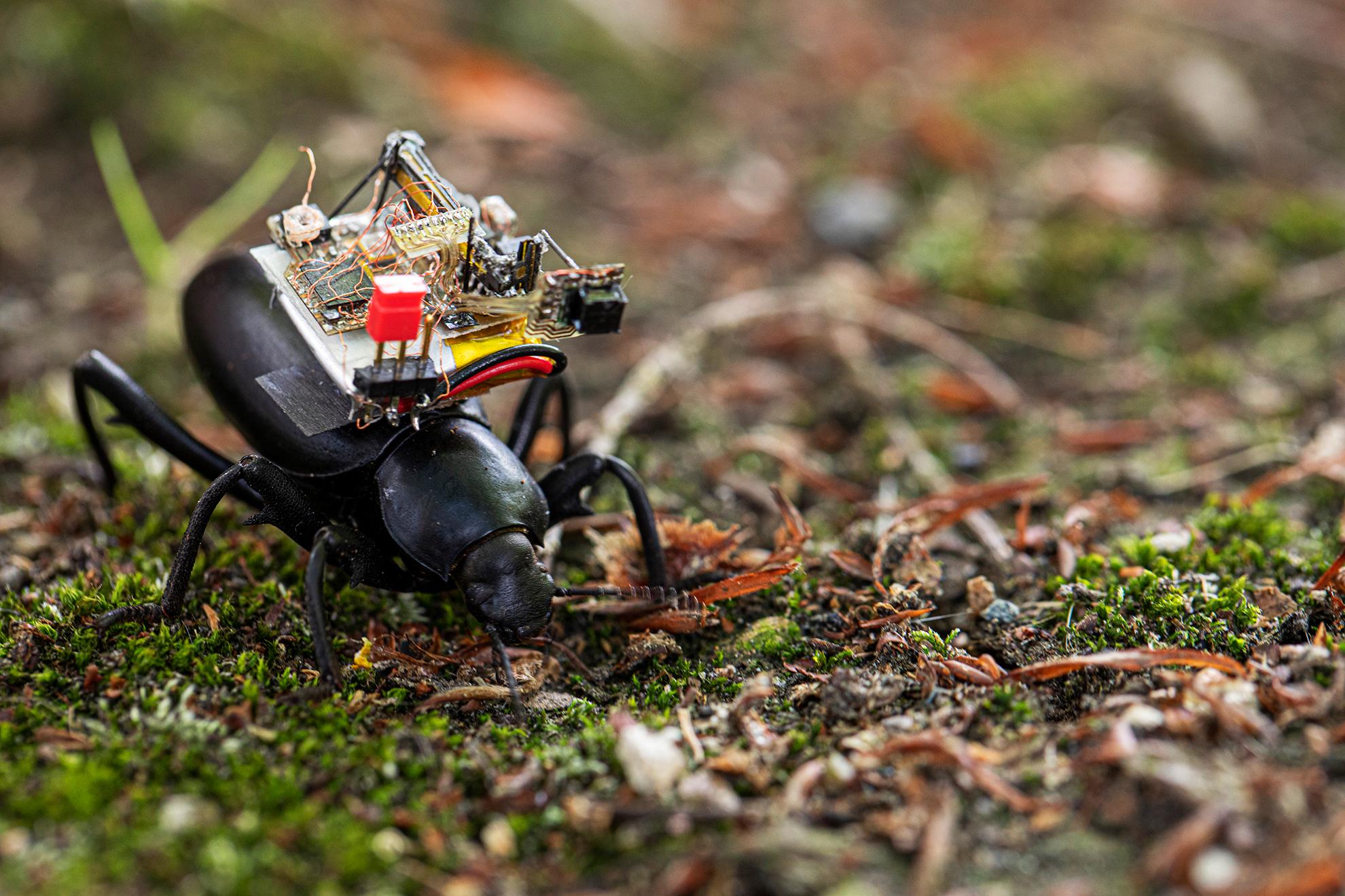 CSE Beetle Camera Team