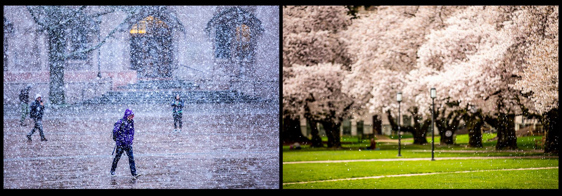 Campus Snow and Cherry blossoms