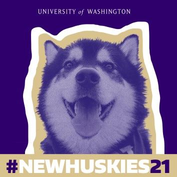 New Huskies 21