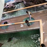 People viewing shark rays at the California Academy of Sciences