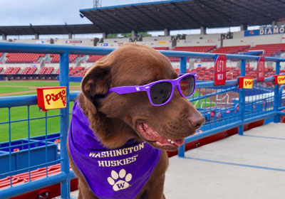 Dog wearing purple sunglasses and Washington Huskies neckscarf