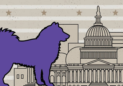 Purple dog in front of Washington DC Skyline illustration
