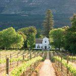 Capetown Vineyard