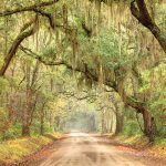 Spanish Moss Trail, Beaufort, South Carolina