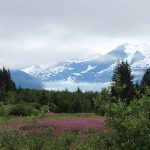 Alaska landscape with pink flowers in the foreground and blue mountain in the background