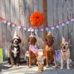 Six dogs, dressed for a party