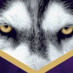 Close up of focused husky dog eyes on a field of purple with cheering crowd