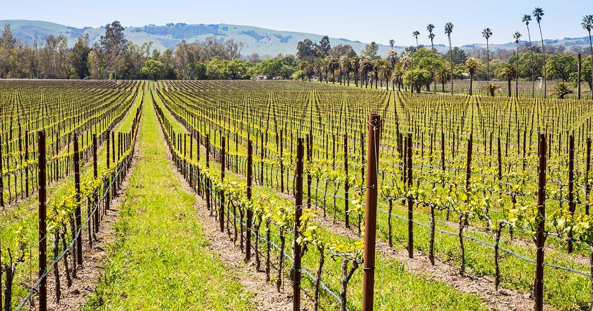 Post Hero Image: CA vineyard