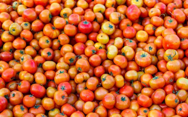 Está máquina separa los tomates verdes de los rojos mientras se cosechan. ¿Cómo lo hace?